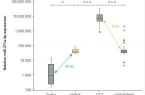 Expression von microRNA-371a-3p im Gewebe von Keimzelltumoren